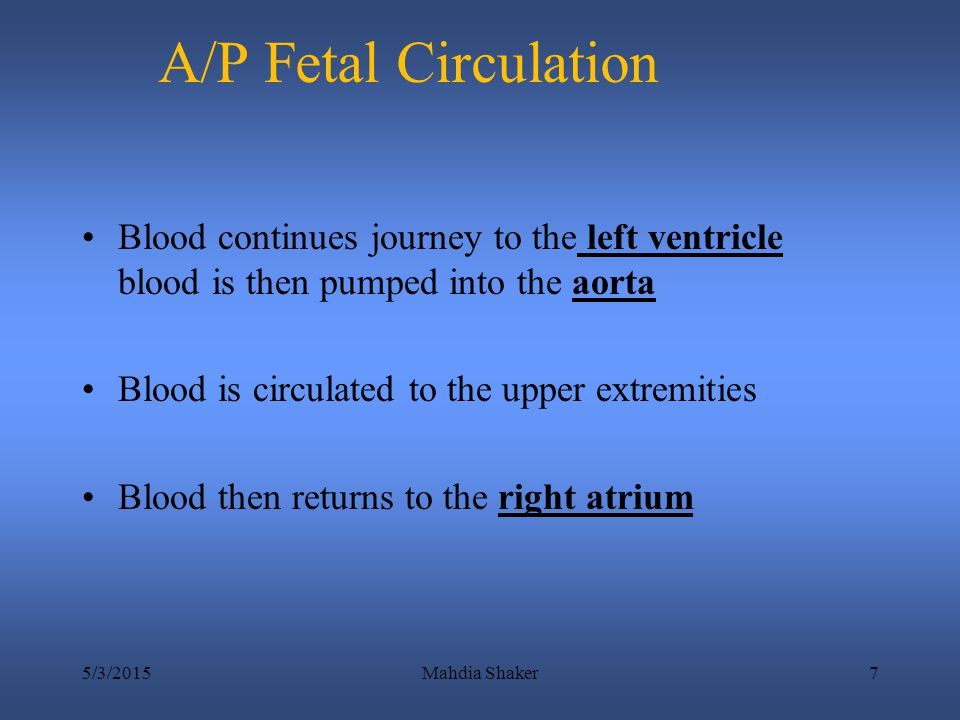 A/P Fetal Circulation Blood continues journey to the left ventricle blood is then pumped into the aorta.