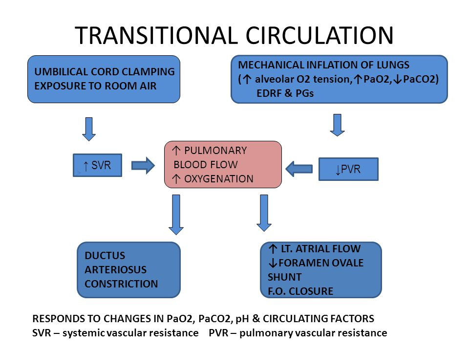 TRANSITIONAL CIRCULATION