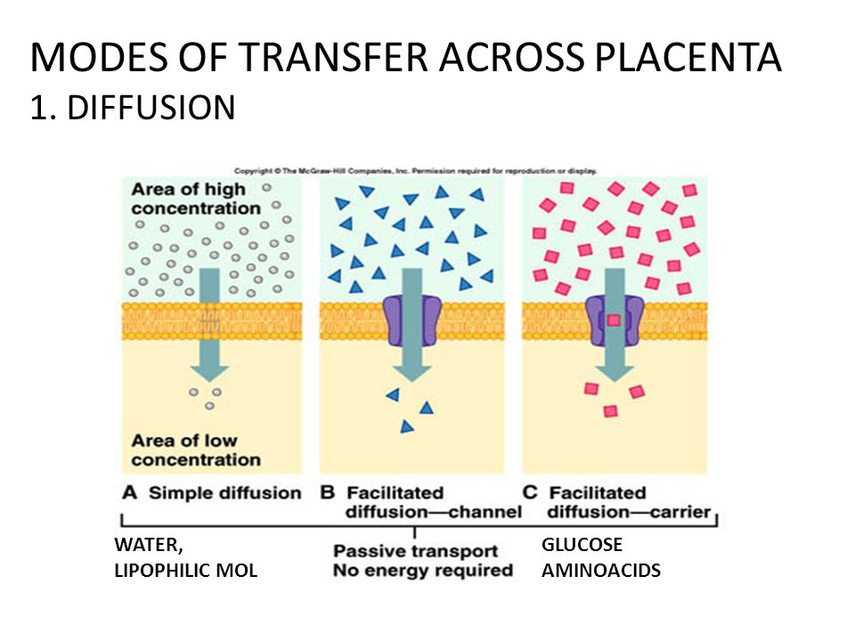 MODES OF TRANSFER ACROSS PLACENTA 1. DIFFUSION
