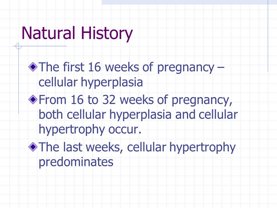 Natural History The first 16 weeks of pregnancy – cellular hyperplasia