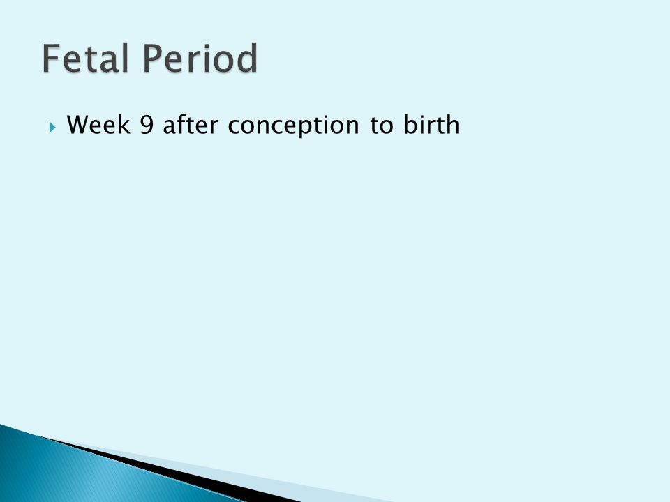 Fetal Period Week 9 after conception to birth