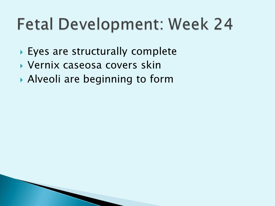 Fetal Development: Week 24