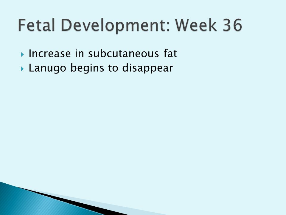 Fetal Development: Week 36