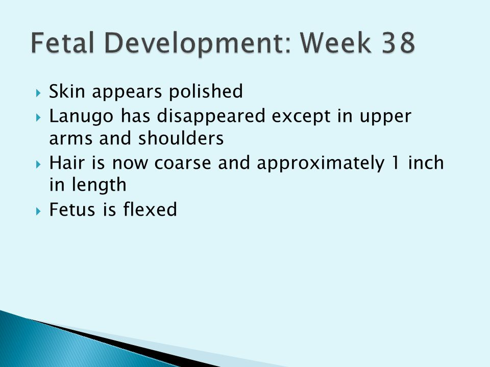Fetal Development: Week 38