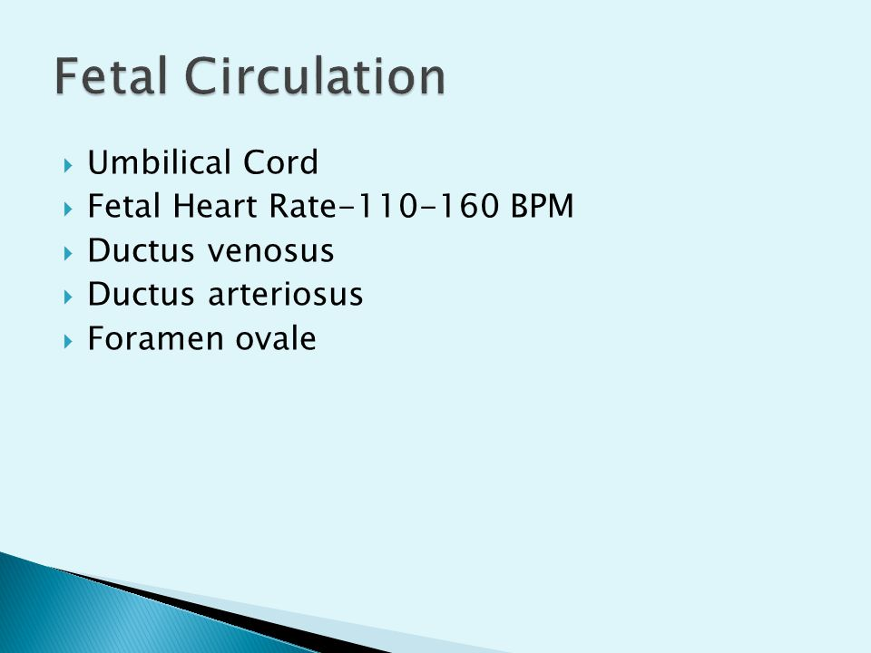 Fetal Circulation Umbilical Cord Fetal Heart Rate-110-160 BPM