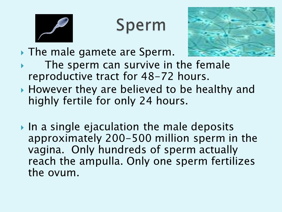 Sperm The male gamete are Sperm.