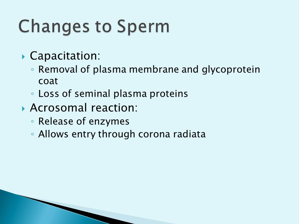 Changes to Sperm Capacitation: Acrosomal reaction: