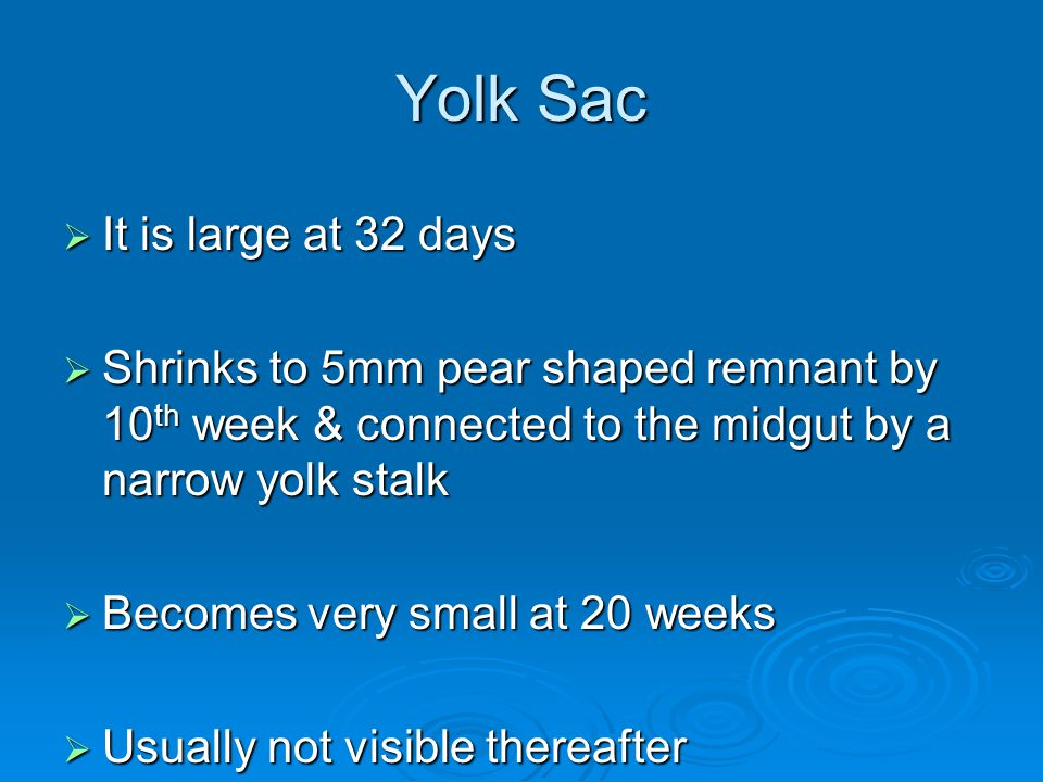 Yolk Sac It is large at 32 days