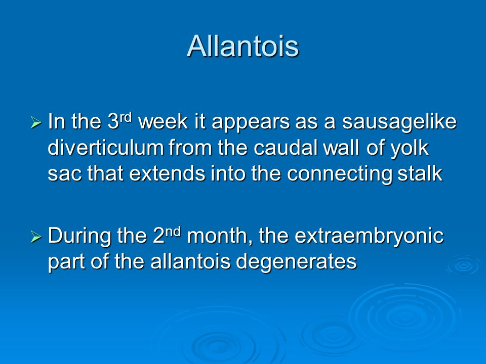 Allantois In the 3rd week it appears as a sausagelike diverticulum from the caudal wall of yolk sac that extends into the connecting stalk.