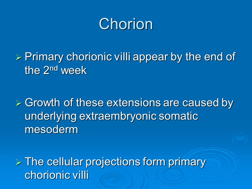 Chorion Primary chorionic villi appear by the end of the 2nd week