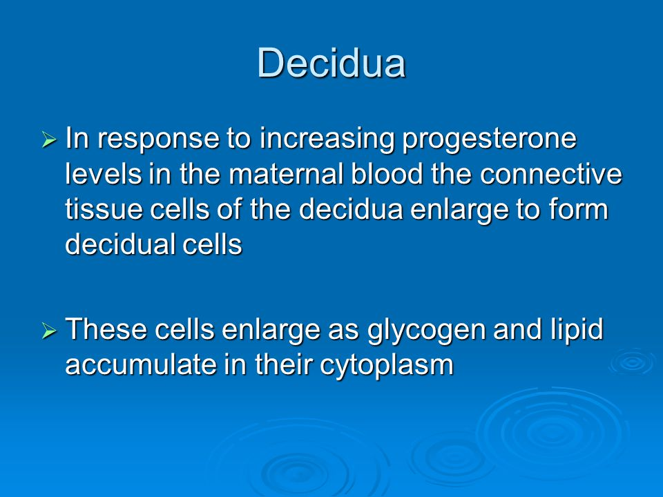 Decidua In response to increasing progesterone levels in the maternal blood the connective tissue cells of the decidua enlarge to form decidual cells.