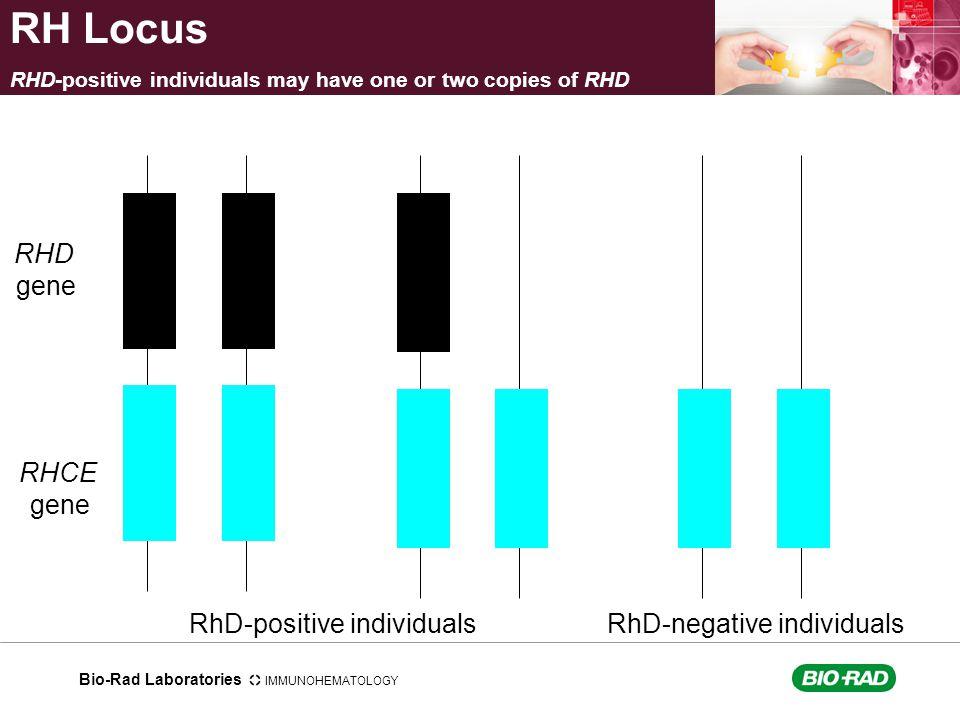 RH Locus RHD gene RHCE gene RhD-positive individuals