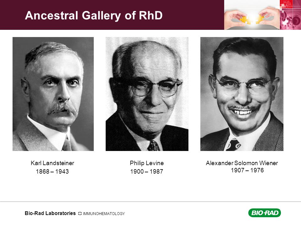 Ancestral Gallery of RhD