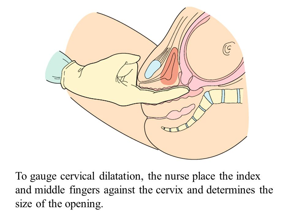 Before labor begins, the cervix is long (approximately 2