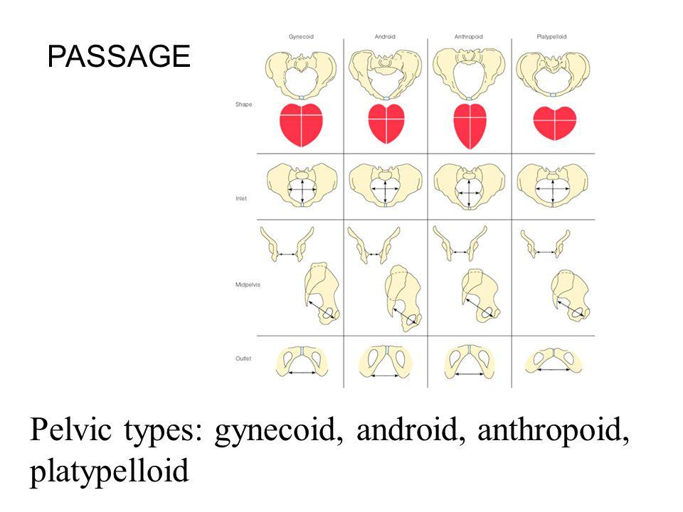 Pelvic types: gynecoid, android, anthropoid, platypelloid