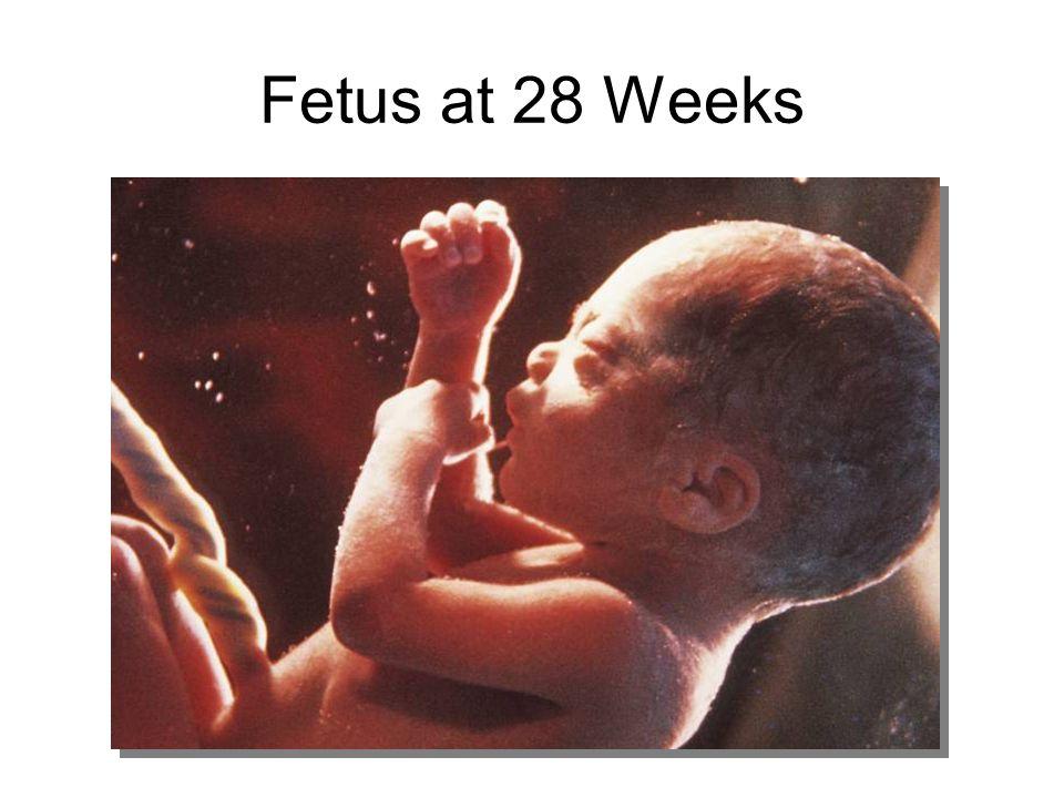 Fetus at 28 Weeks