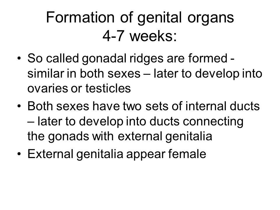 Formation of genital organs 4-7 weeks: