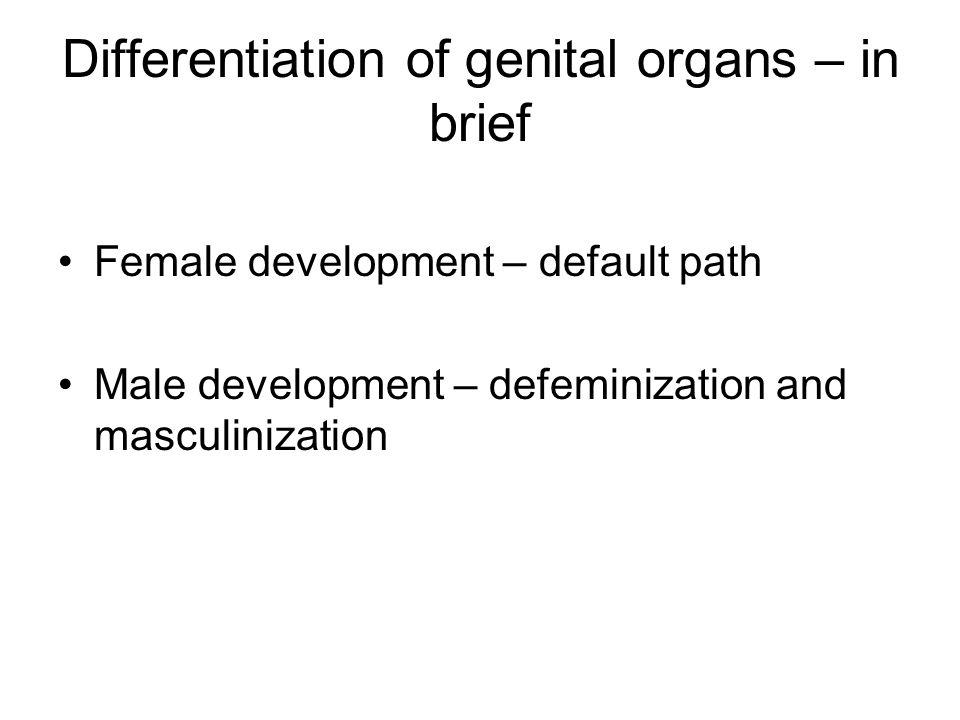 Differentiation of genital organs – in brief