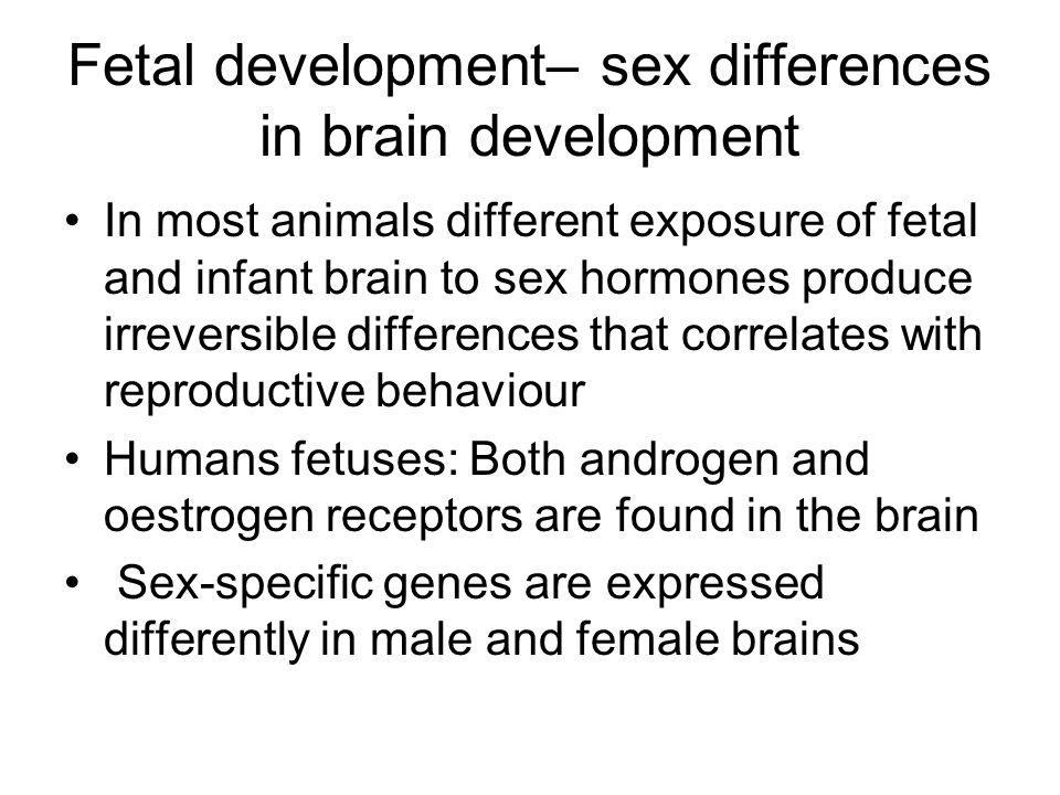 Fetal development– sex differences in brain development
