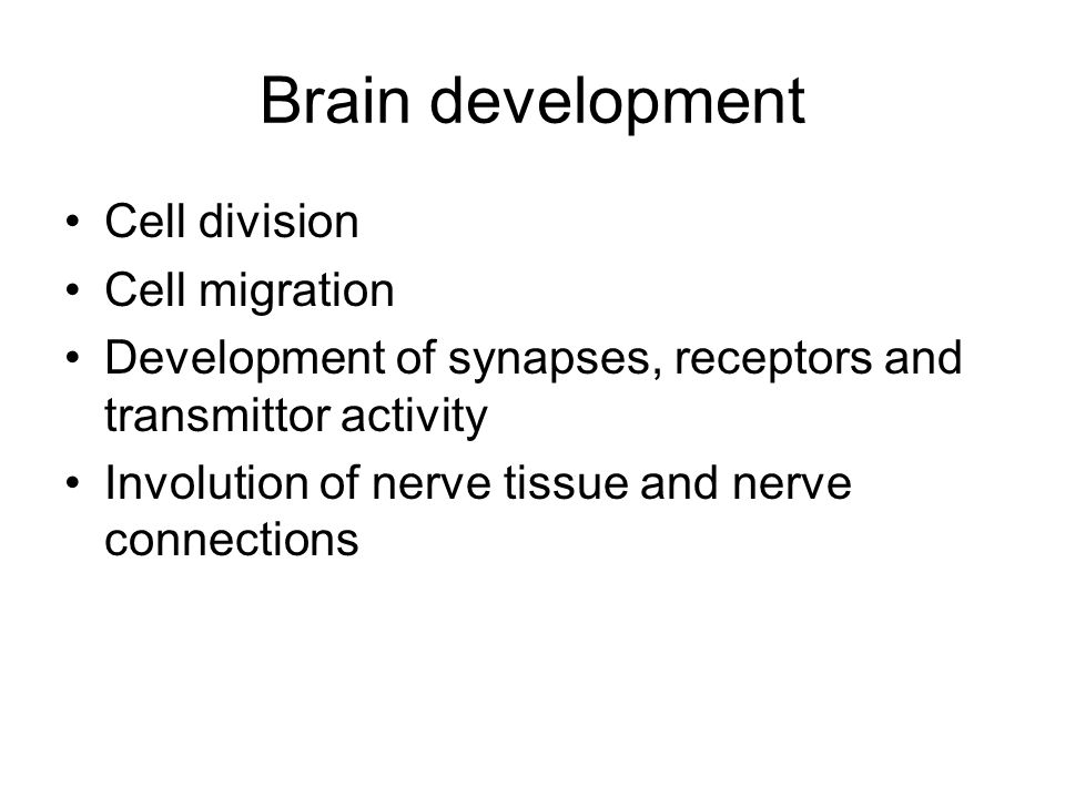 Brain development Cell division Cell migration