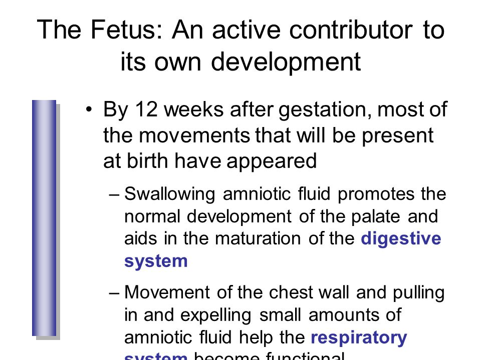 The Fetus: An active contributor to its own development