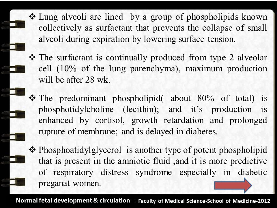 Lung alveoli are lined by a group of phospholipids known collectively as surfactant that prevents the collapse of small alveoli during expiration by lowering surface tension.
