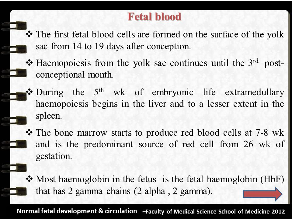 Fetal blood The first fetal blood cells are formed on the surface of the yolk sac from 14 to 19 days after conception.