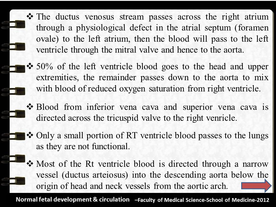 The ductus venosus stream passes across the right atrium through a physiological defect in the atrial septum (foramen ovale) to the left atrium, then the blood will pass to the left ventricle through the mitral valve and hence to the aorta.
