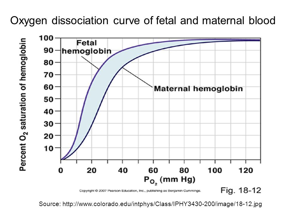 Oxygen dissociation curve of fetal and maternal blood