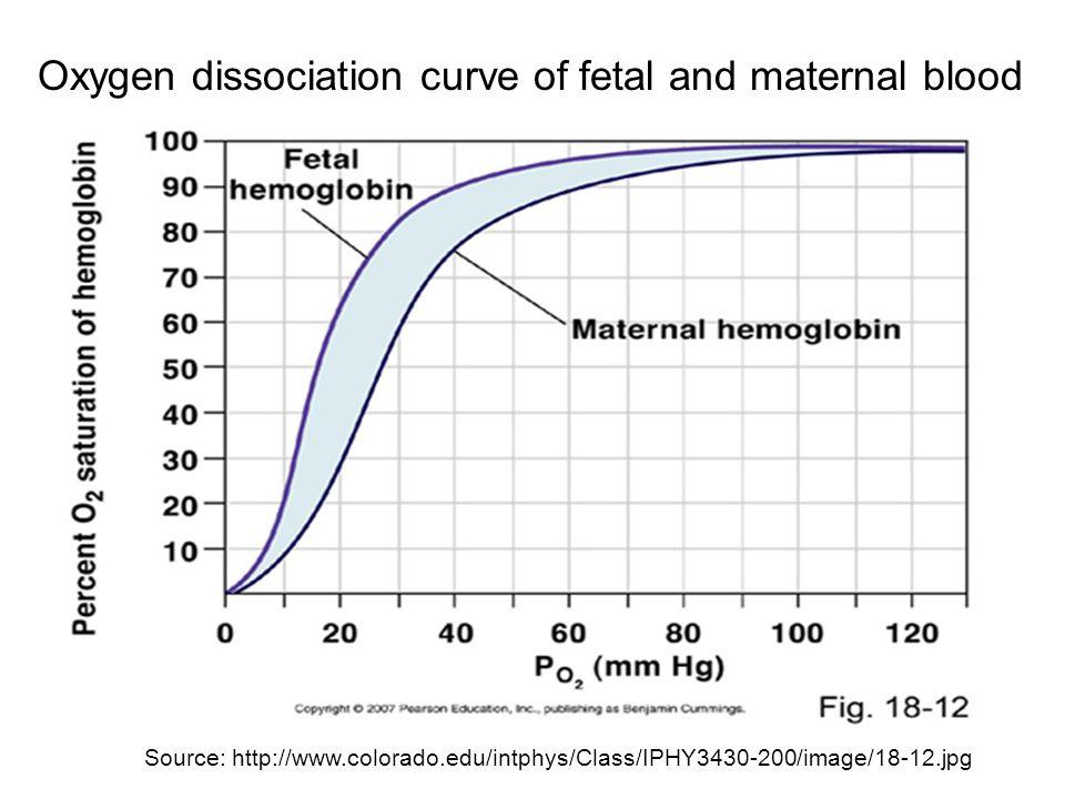 Oxygen dissociation curve of fetal and maternal blood