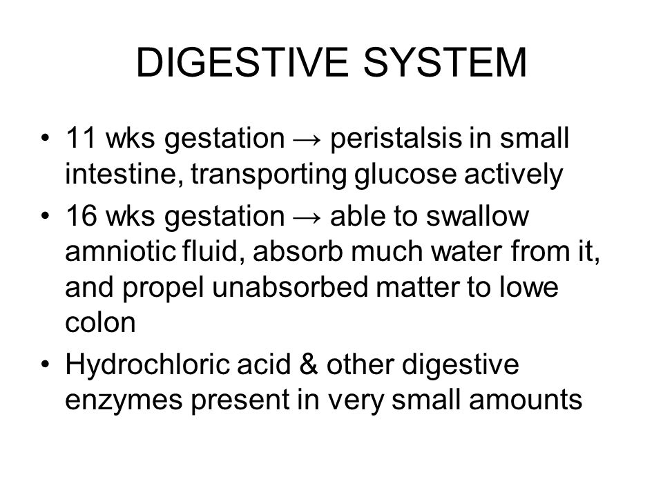 DIGESTIVE SYSTEM 11 wks gestation → peristalsis in small intestine, transporting glucose actively.
