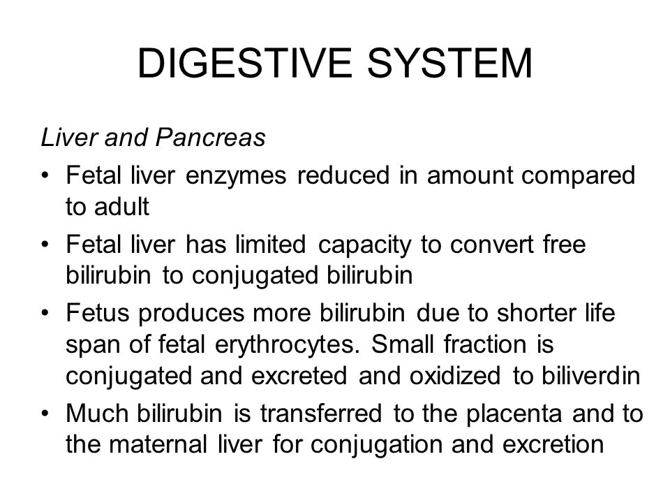 DIGESTIVE SYSTEM Liver and Pancreas