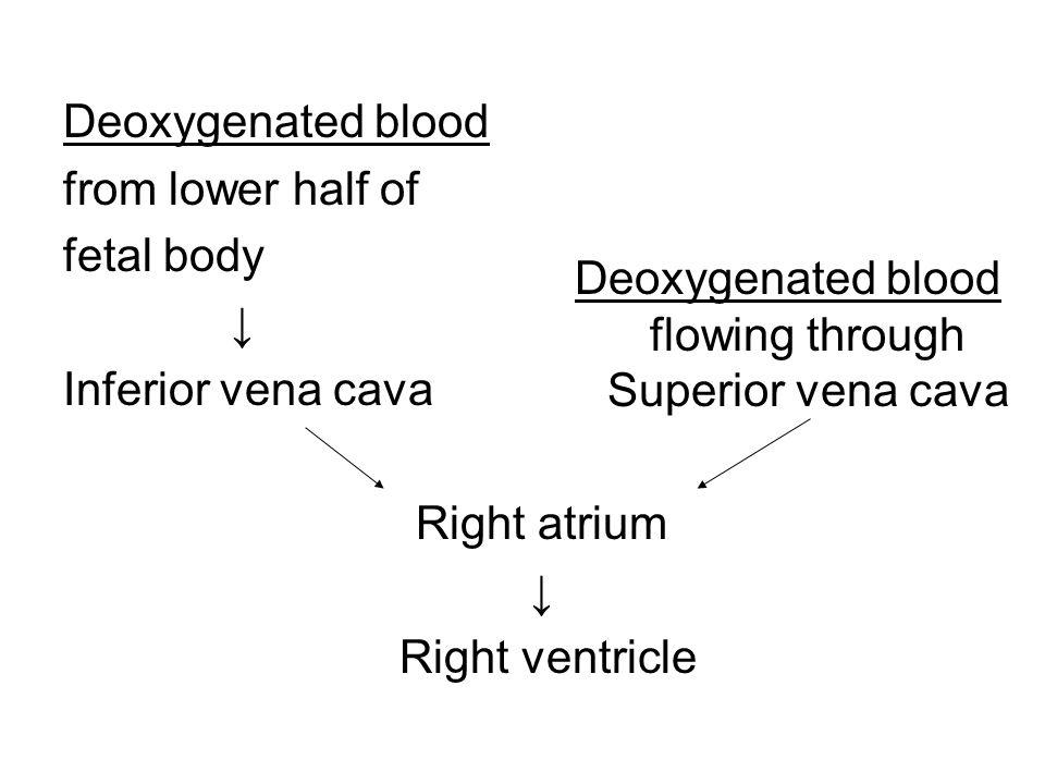 Deoxygenated blood flowing through Superior vena cava