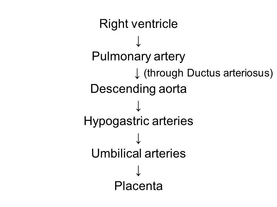 ↓ (through Ductus arteriosus)