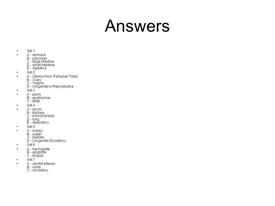 Answers Set 1. A - stomach B - pancreas C - large intestine D - small intestine E - digestive. Set 2.
