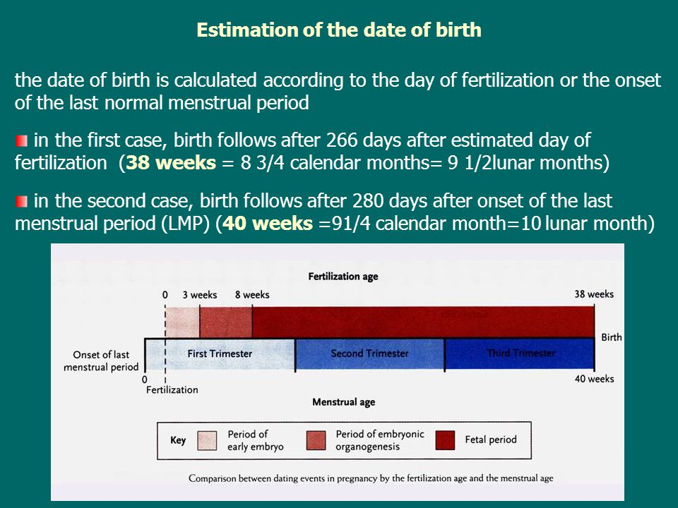 Estimation of the date of birth