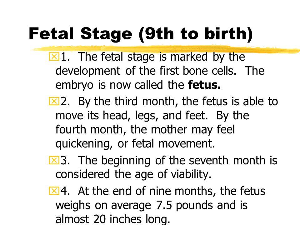 Fetal Stage (9th to birth)