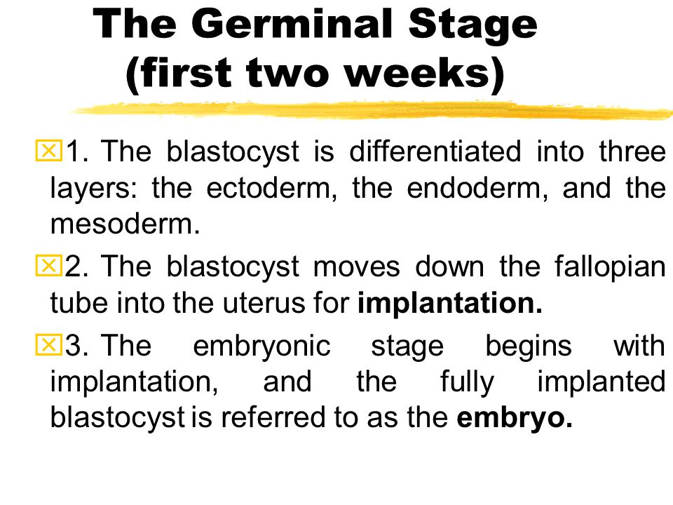 The Germinal Stage (first two weeks)