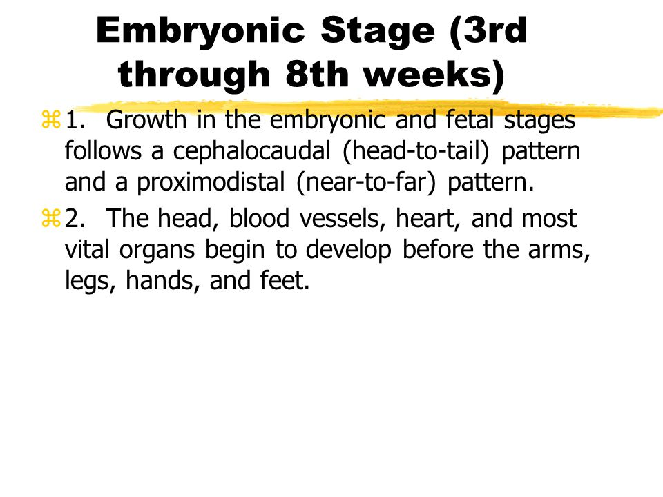 Embryonic Stage (3rd through 8th weeks)