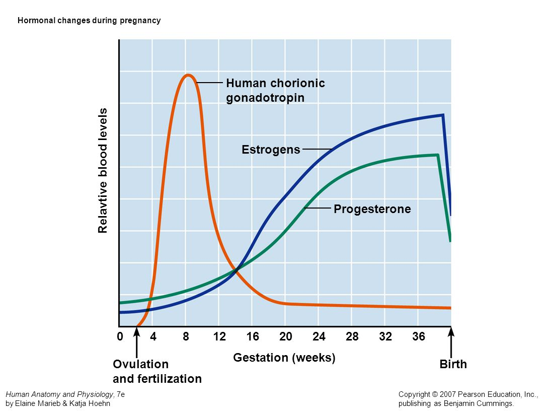 Hormonal changes during pregnancy