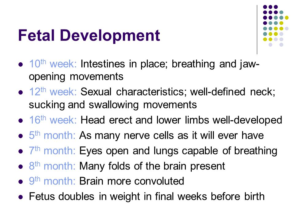 Fetal Development 10th week: Intestines in place; breathing and jaw-opening movements.