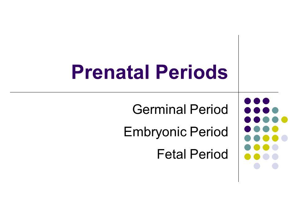 Germinal Period Embryonic Period Fetal Period