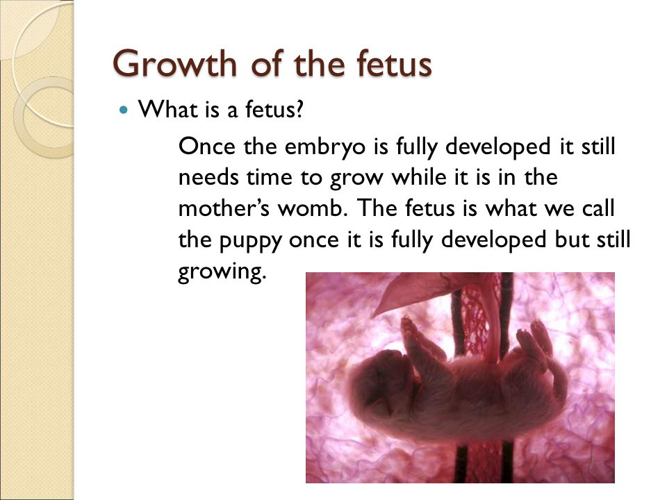 Growth of the fetus What is a fetus