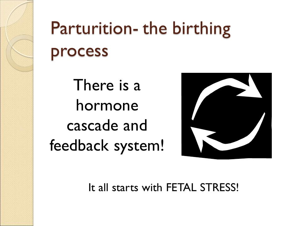 Parturition- the birthing process