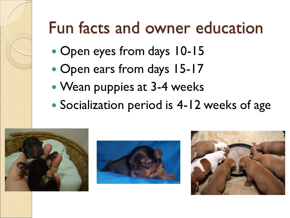 Fun facts and owner education
