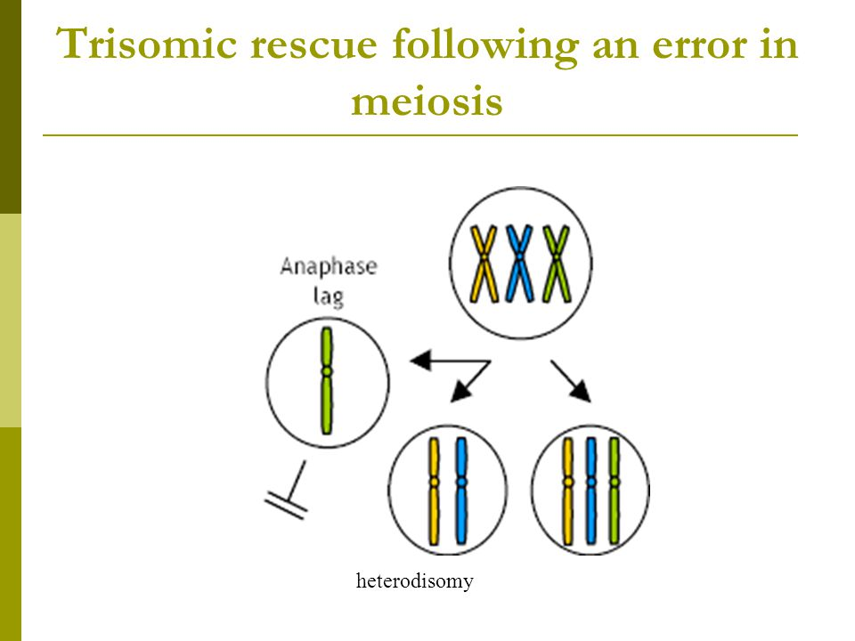 Trisomic rescue following an error in meiosis