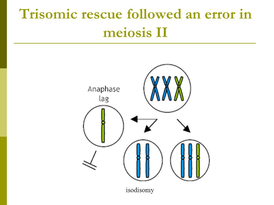 Trisomic rescue followed an error in meiosis II