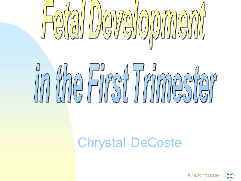 Fetal Development in the First Trimester Chrystal DeCoste