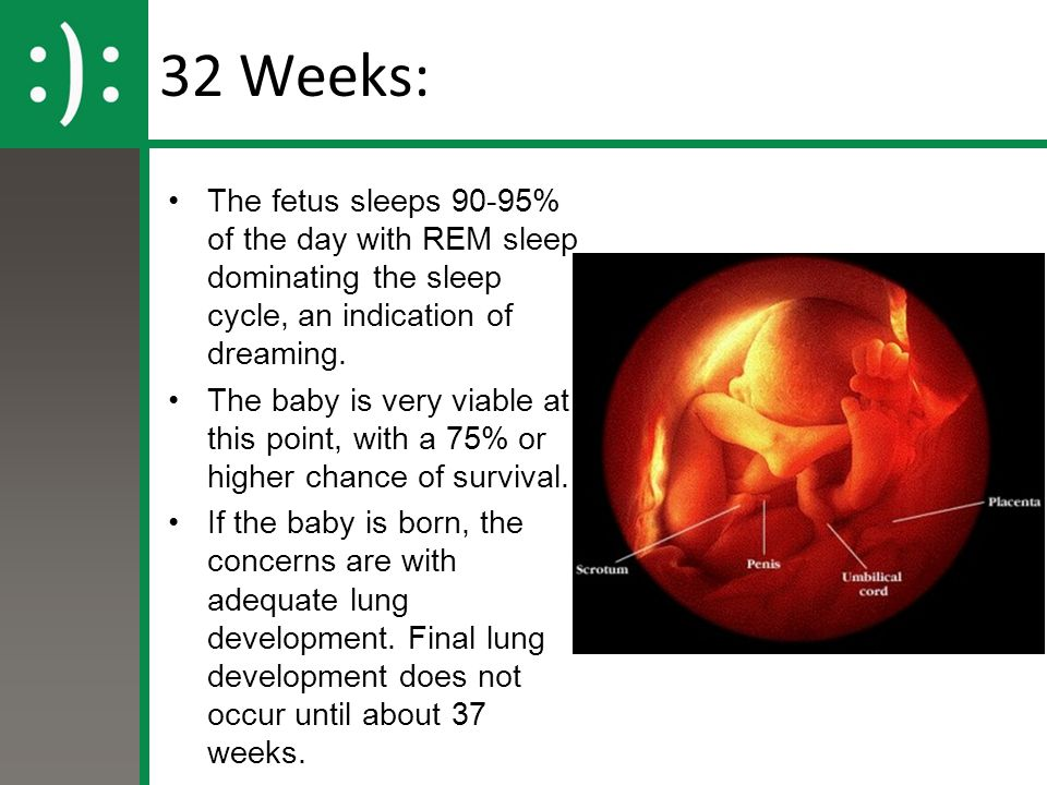 32 Weeks: The fetus sleeps 90-95% of the day with REM sleep dominating the sleep cycle, an indication of dreaming.