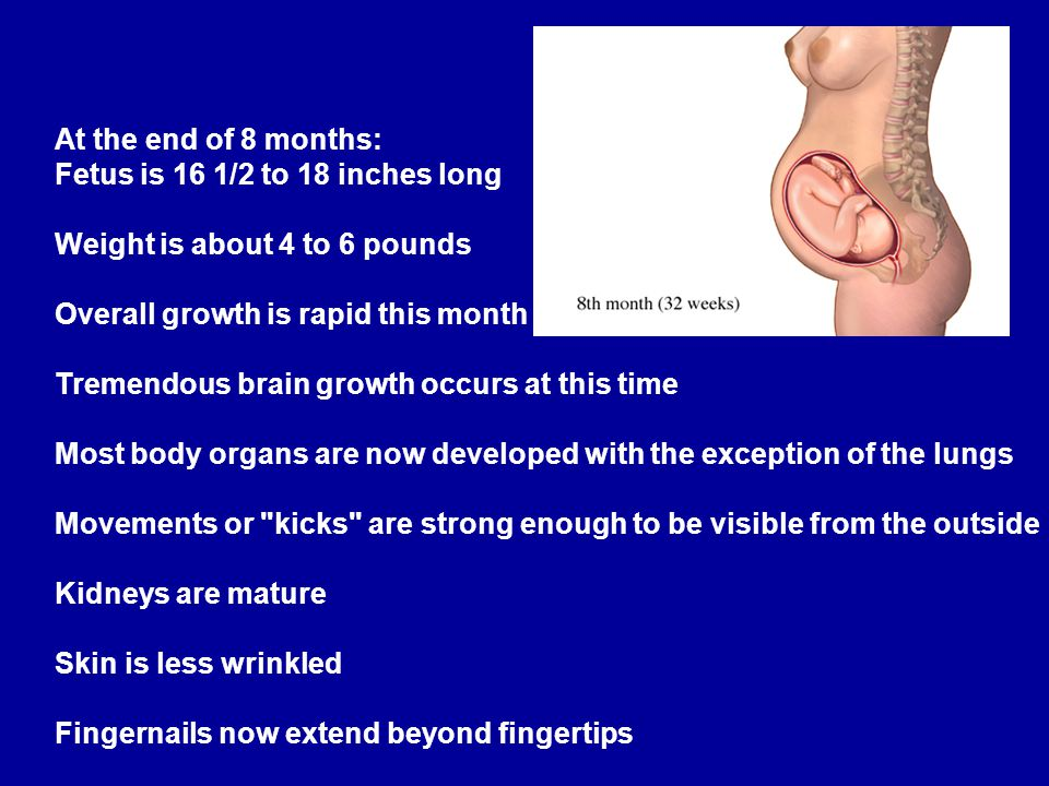 At the end of 8 months: Fetus is 16 1/2 to 18 inches long. Weight is about 4 to 6 pounds. Overall growth is rapid this month.